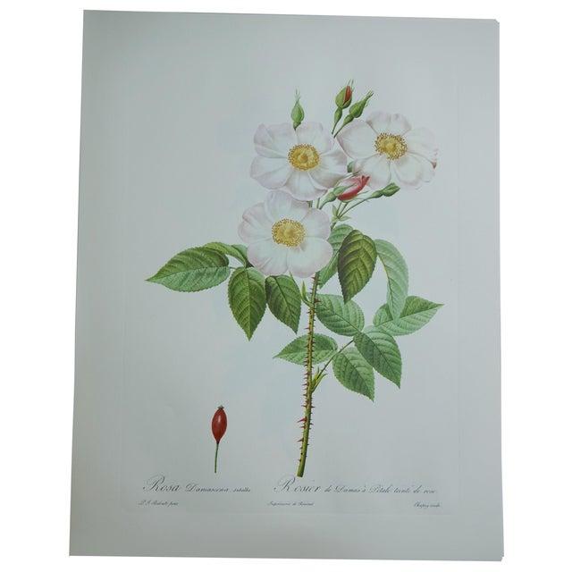 White Roses Botanical Print - Image 1 of 5