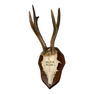 Vintage Black Forest Roe Deer Antlers For Sale