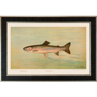 American Fish 13 the Kern River Trout by Harris CFA Edition Giclee Print For Sale