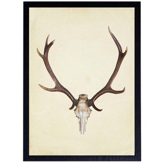 "Vertical Antlers - 25"" X 33"" For Sale"