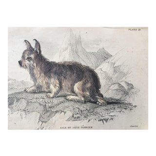 19th Century Jardine Skye Terrier Dog Print