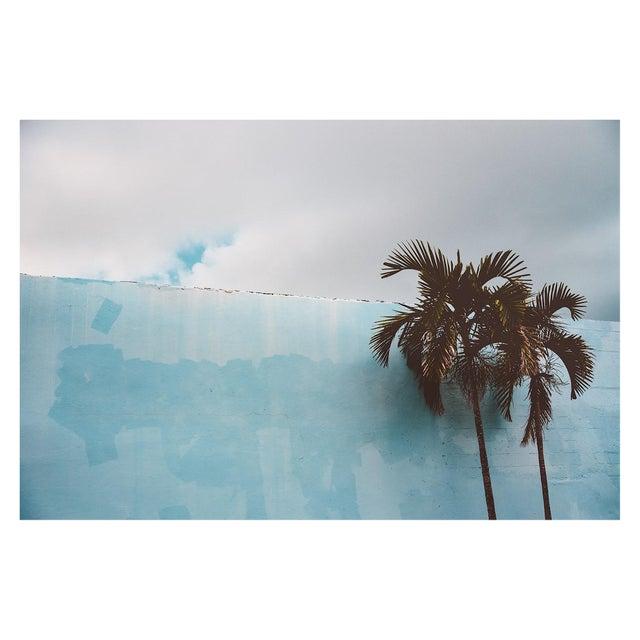 Palm Trees Against Blue Miami Beach Photo Pigment Print For Sale