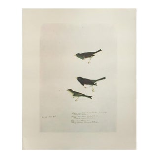 1966 Cottage Lithograph of Birds of America by John James Audubon For Sale