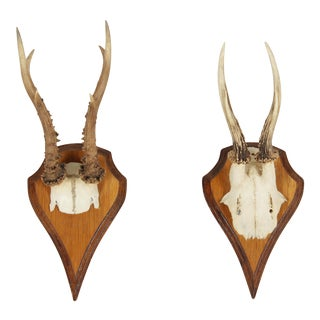 Vintage German Roe Deer Antlers - a Pair