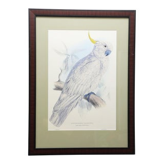 Framed Vintage Reproduction of Edward Lear's Greater Sulphur-Crested Cockatoo For Sale