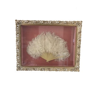 Vintage Shadowboxed Framed Ostrich Feathers For Sale