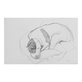 """Drawing, """"Terrier Dog Asleep"""" Drawing by Martha Holden For Sale"""