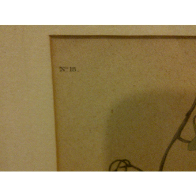 """Vintage """"Florida Jay"""" Engraving Copy For Sale In Pittsburgh - Image 6 of 8"""