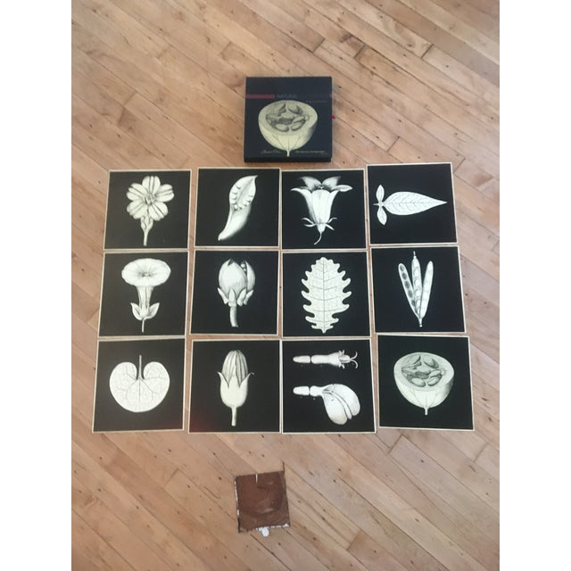 Traditional Botanical Prints - Set of 12 For Sale - Image 3 of 3