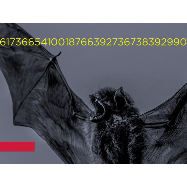 Monotone image of a European Pipistrelle bat (Still life) with overlaid typography and colour zones. This photograph is...