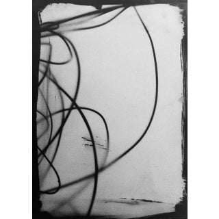 """Botanical Light Drawing 1,"" Rinne Allen For Sale"