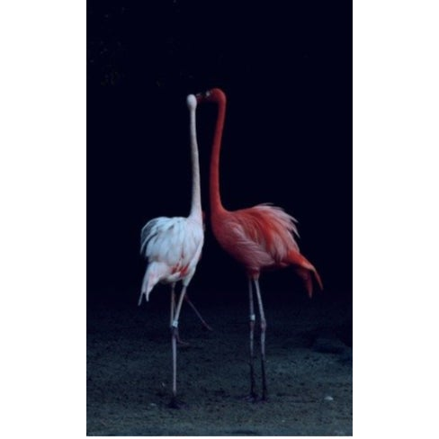 "Contemporary Nicole Cohen ""Flamingos"" Pigment Print For Sale - Image 3 of 3"