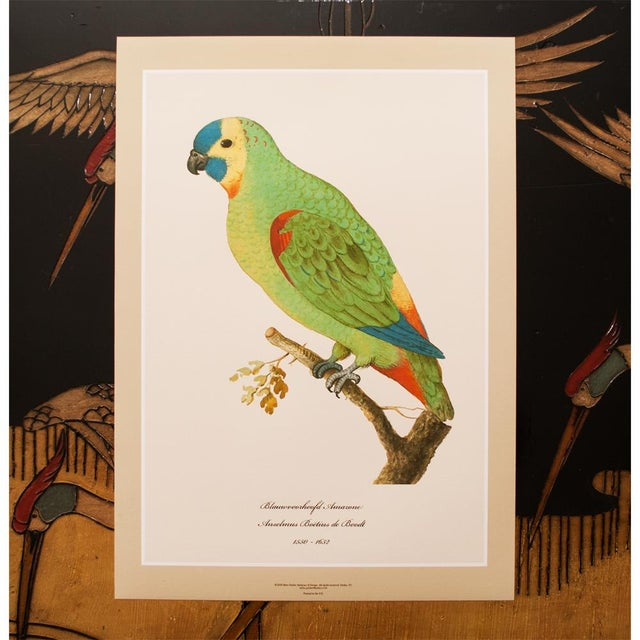 1590s Large Print of Blue-Fronted Amazon by Anselmus De Boodt For Sale In Dallas - Image 6 of 7