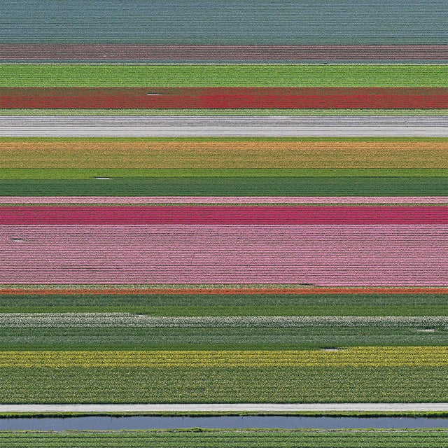 """""""AV_Tulip_Fileds_014"""" Contemporary Limited Edition Fine Art Photograph Print by Bernhard Lang For Sale"""