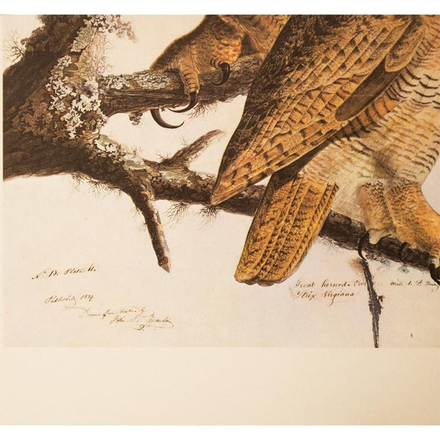 John James Audubon 1960s Cottage Lithograph of Great Horned Owl by Audubon For Sale - Image 4 of 9