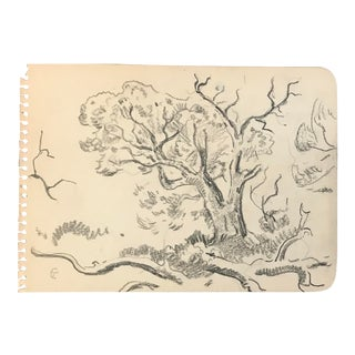 1920s Traditional Drawing, Plein Air Sketch of a Tree by Eliot Clark
