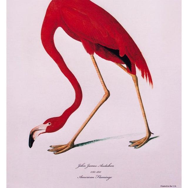 American American Flamingo by John James Audubon, Large Reproduction Print For Sale - Image 3 of 9