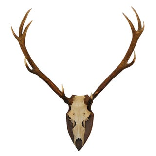 Large Deer Horn Wall Plaque For Sale
