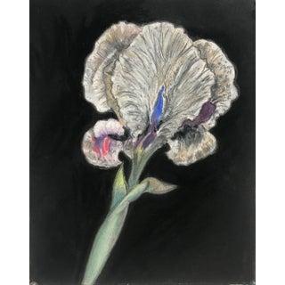 Botanical Drawing, Bearded Iris 2 For Sale