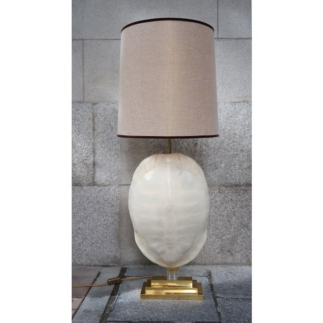 Fine a pair of turtle table lamps decaso turtle and gilded brass aloadofball Choice Image