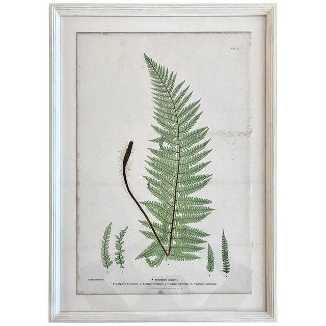 White 19th Century Bradbury & Evans Nature Printed Fern Print For Sale - Image 8 of 8