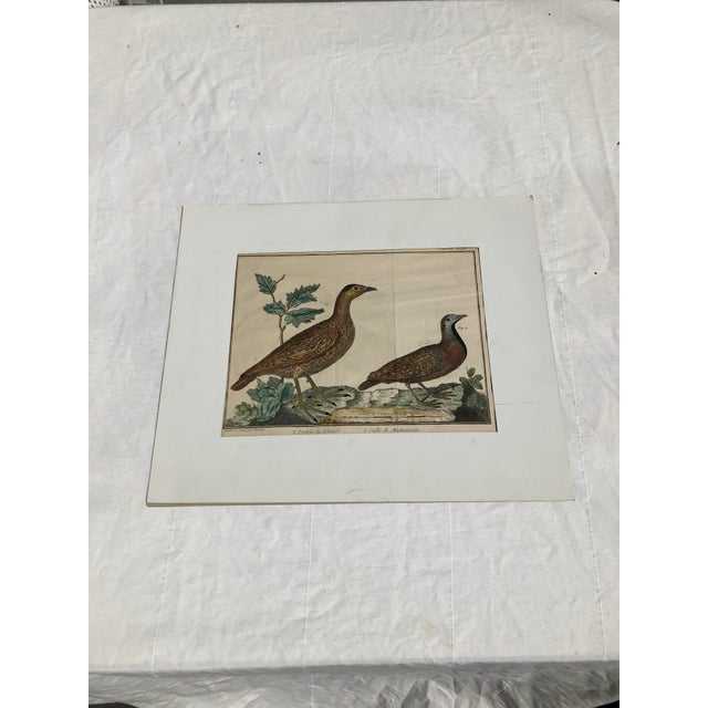 18th Century French Matted Bird Engraving by Martinet Featuring a Senegal Partridge and a Madagascar Quail For Sale - Image 13 of 13