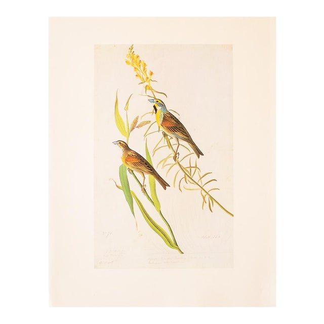 1966 Black-Throated Bunting & Dickcissel by John James Audubon, Cottage Style Lithograph For Sale