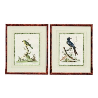 Pair of Mid 18th Century Bird Engravings by George Edwards For Sale