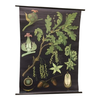 1976 German Botanical Roll-Up Chart For Sale