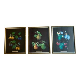 1940s Vintage Botanical Fruit Prints- Set of 3 For Sale