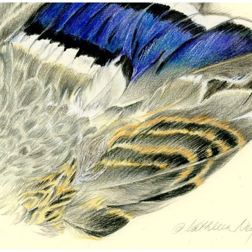 Americana Wing of a Mallard Original Drawing For Sale - Image 3 of 4