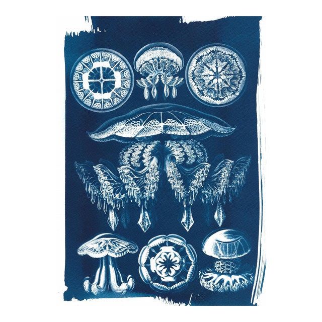 Jellyfish Anatomical Drawing by Ernst Haeckel, Cyanotype Print, A4 Size (Limited Edition) - Image 1 of 5