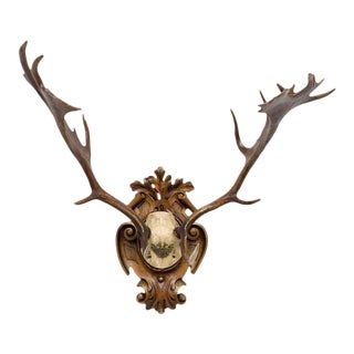 19th Century Habsburg Fallow Deer Hunt Trophy For Sale