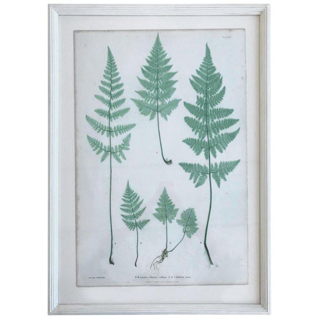 Glass 19th Century Bradbury and Evans Nature Printed Fern Print For Sale - Image 7 of 7