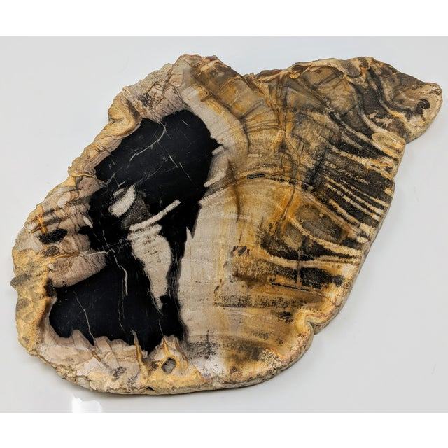 Polished Petrified Wood Tray For Sale In Providence - Image 6 of 13