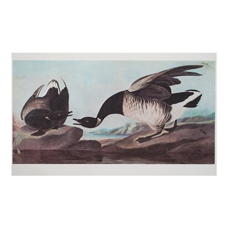 XL Vintage Lithograph of Brant Goose