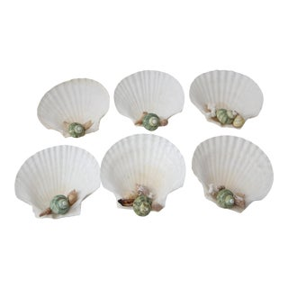 White Scallop Shells - Set of 6