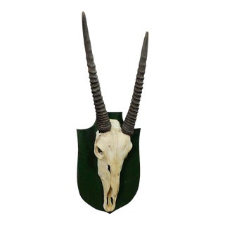 Trophy of a Oryx Anthelope From the Noble Estate Salem in South Germany For Sale