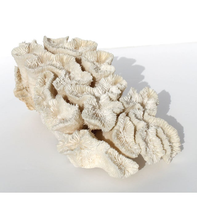 Antique Coral Piece - Image 2 of 3