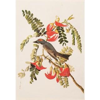 Gray Kingbird by John J. Audubon, 1966 Vintage American Classical Print For Sale