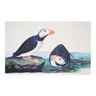 1966 Cottage Style Lithograph of Large-Billed Puffins by John James Audubon