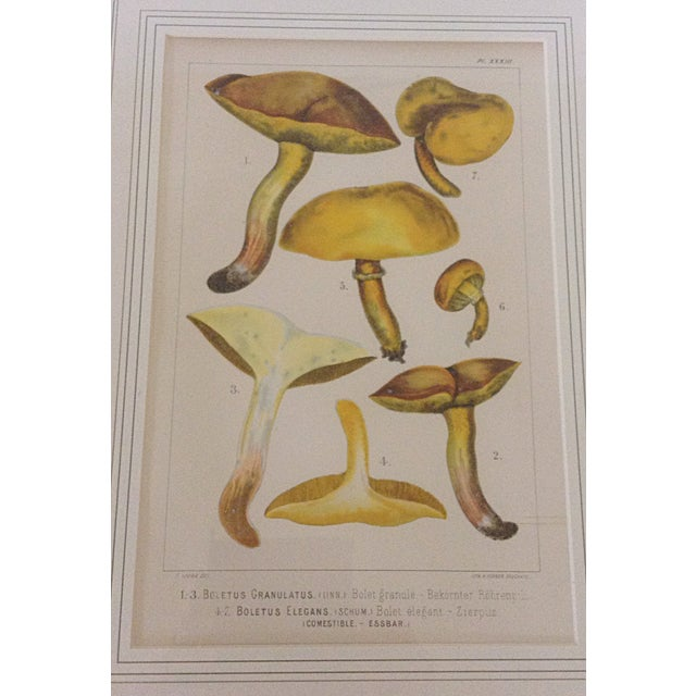 French Country Botanical Lithograph of Yellow Mushroom For Sale - Image 3 of 4
