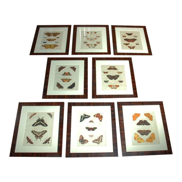 Early 18th Century Antique Butterfly Prints - Set of 8 For Sale