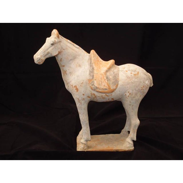 Tang Dynasty Painted Pottery Model of a Horse For Sale - Image 4 of 6