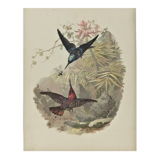 C1880s French Antique Bird Chromolithograph For Sale