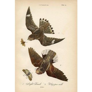 Night Hawk, 1880s Lithograph For Sale