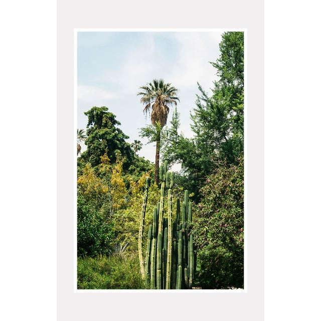 """California Flora"" Original Unframed Photograph For Sale - Image 4 of 6"