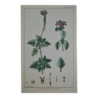 "Rare 18th Century Hand Colored Botanical Engraving Plate XXXVIII From ""Jardin D'Eden"" by Pierre Joseph Buchoz For Sale"