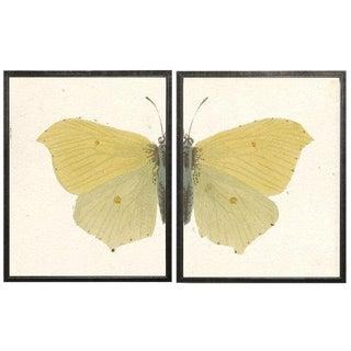 "Split Yellow Butterfly - 46"" X 29"" For Sale"
