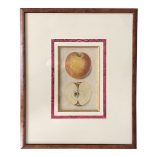 Antique Apple Botanical Print-Custom Framed-1913 For Sale